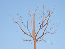 Lonely deciduous tree Royalty Free Stock Photo