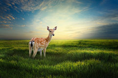 Lonely Deer Royalty Free Stock Photos