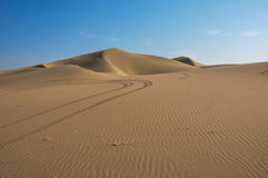 Lonely in the desert of Huacachina, Peru Stock Images