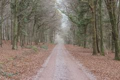 Lonely dirt road running through a dense forest stock photos
