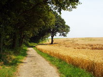 Lonely dirt road. Lonely dirt track between the edge of the forest and wheat field Stock Images