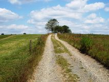 Lonely dirt road. Uphill to a clump of trees. Blue sky with white clouds Stock Image