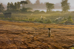 Lonely Dog. Stray dog sitting in the countryside on a misty morning Royalty Free Stock Photo
