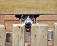 Free Lonely Dog Stock Images - 24229444