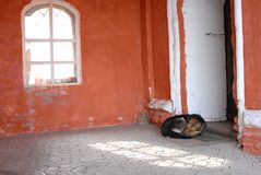 Lonely dog. Sleeping near a door Royalty Free Stock Photos
