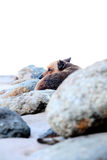 Lonely dog. View of a lonely dog on the beach beatween rocks with a lot of cold Royalty Free Stock Images