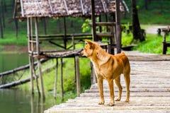 Lonely dog at bamboo Raft in Pang- Oung Lake park ,Mae Hong Son Stock Photo