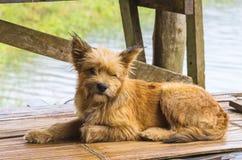 Lonely dog at bamboo Raft in Pang- Oung Lake park ,Mae Hong Son Royalty Free Stock Photos