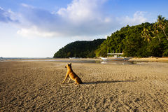 lonely dog at beach Stock Image
