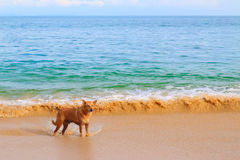 A lonely dog on the beach Stock Images