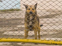 Lonely dog behind a fence looking at the camera Stock Photos