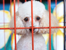 Lonely dog in cage Royalty Free Stock Photography