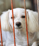 Lonely dog in cage Royalty Free Stock Image