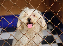 Lonely dog in cage Stock Photos