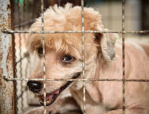Lonely dog in cage Stock Photo