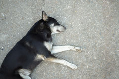 Lonely dog. Cute asian lonely dog homeless stray on street cement floor, sidewalk Royalty Free Stock Photos