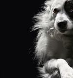 Lonely dog on a dark background. Portrait of lonely dog on a dark background Stock Photo