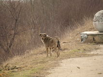 Lonely Dog in a Dirty Place Royalty Free Stock Photography