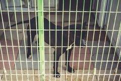 Lonely dog in dog shelter waiting stock photos