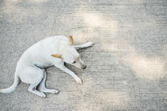 Lonely dog. Homeless stray on street cement floor, sidewalk Stock Photography