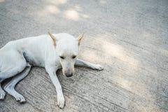 Lonely dog. Homeless stray on street cement floor, sidewalk Stock Photo