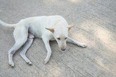Lonely dog. Homeless stray on street cement floor, sidewalk Stock Image