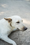 Lonely dog. Homeless stray on street cement floor, sidewalk Royalty Free Stock Images