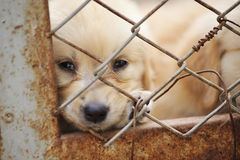 Lonely Dog In Cage Royalty Free Stock Images