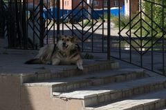 A lonely dog lies near the entrance to the old house. A lonely dog lies near the entrance to the old house Stock Photography