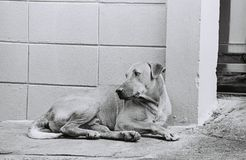 A LONELY DOG Royalty Free Stock Image