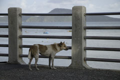 The lonely dog Royalty Free Stock Photos