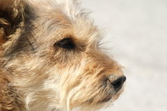 Lonely dog Stock Images