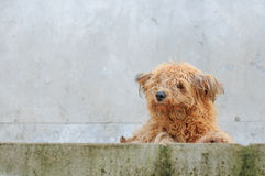 Lonely dog. It looked like a dirty dog Royalty Free Stock Photos