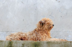 Lonely dog. It looked like a dirty dog Stock Photo