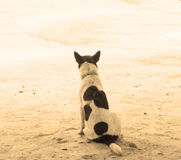 Lonely dog looking  sepia filter Stock Photo