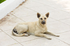 Lonely dog. A nearly blind dog wait for someone heip Stock Photos
