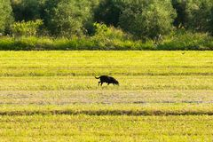 Lonely dog out in a farm. A bucolic scenery Stock Photography