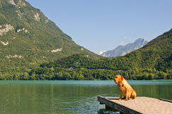 Lonely dog at the pier with mountains background Royalty Free Stock Image