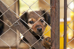 Lonely dog puppy Royalty Free Stock Photos