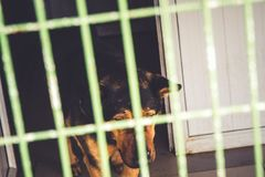Lonely dog in dog shelter waiting stock photography