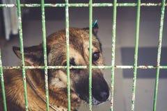 Lonely dog in dog shelter waiting royalty free stock image
