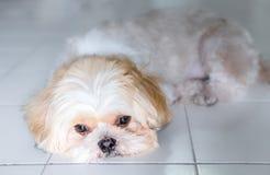 Lonely dog sleeps. Royalty Free Stock Photography