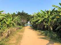 Cambodia Phonm Penh Silk Island View Mekong River. Lonely dog is strolling along the gravel path in tropical environment towards Mekong River Side to look out stock image