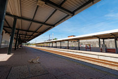 A lonely dog on a train station Royalty Free Stock Images