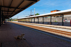 A lonely dog on a train station Stock Photography