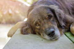 Lonely dog waiting for its ower, shallow depth of field, sunshine effect Royalty Free Stock Images