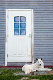 Lonely dog waiting owner near the door. stock photos
