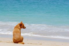 Lonely. Dog waiting someone Royalty Free Stock Photos