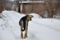 Lonely dog Stock Photography
