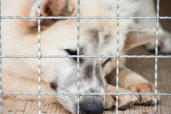 Lonely dog was trapped in cage and waiting for rescued from huma. N. It`s a pet that the best friend of human stock photography